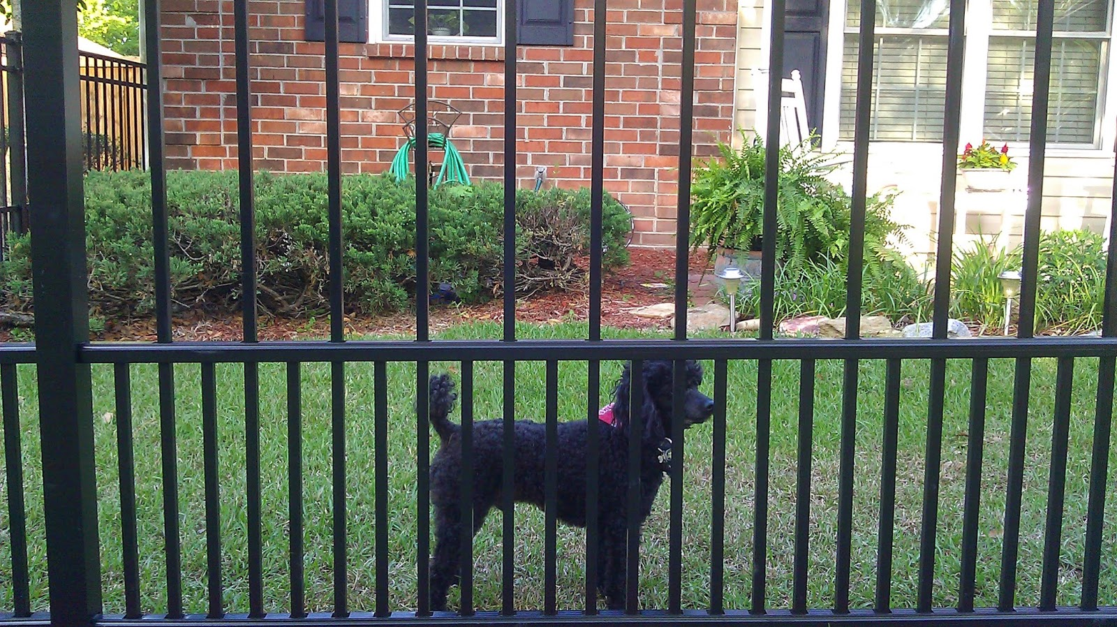 Town Amp Country Fences Llc Save The View Amp Contain The