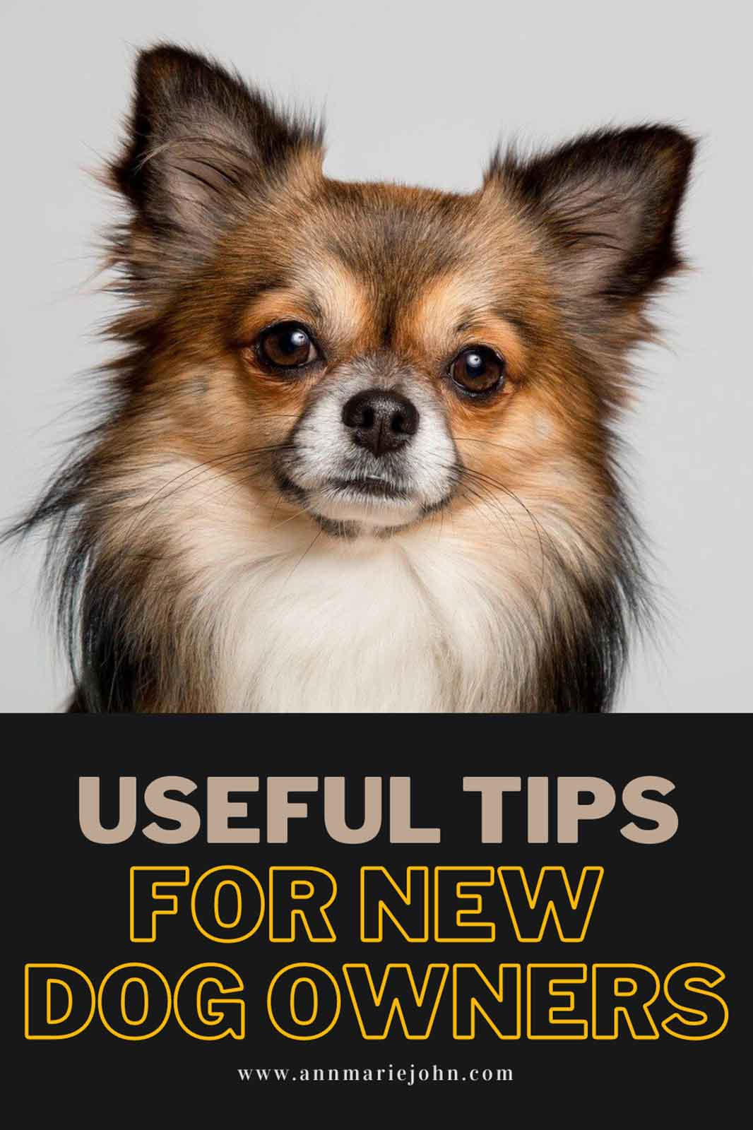 Useful Tips For New Dog Owners