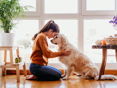Cuida efectivamente de la salud de tu perro