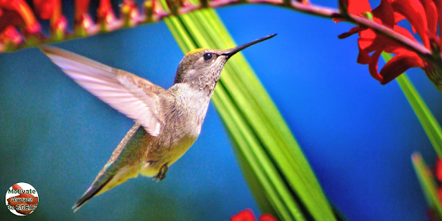"Featured in the article: ""Hit The Ground Running, So You Can Hit The Sky Flying!"" Hummingbird"