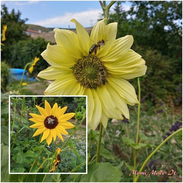 Sonnenblumen mit Bienen - Sunflowers with bees