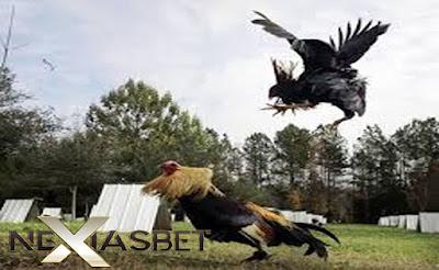 Agen S128 Aplikasi Permainan Adu Ayam Terpercaya - Nexiasbet88.info