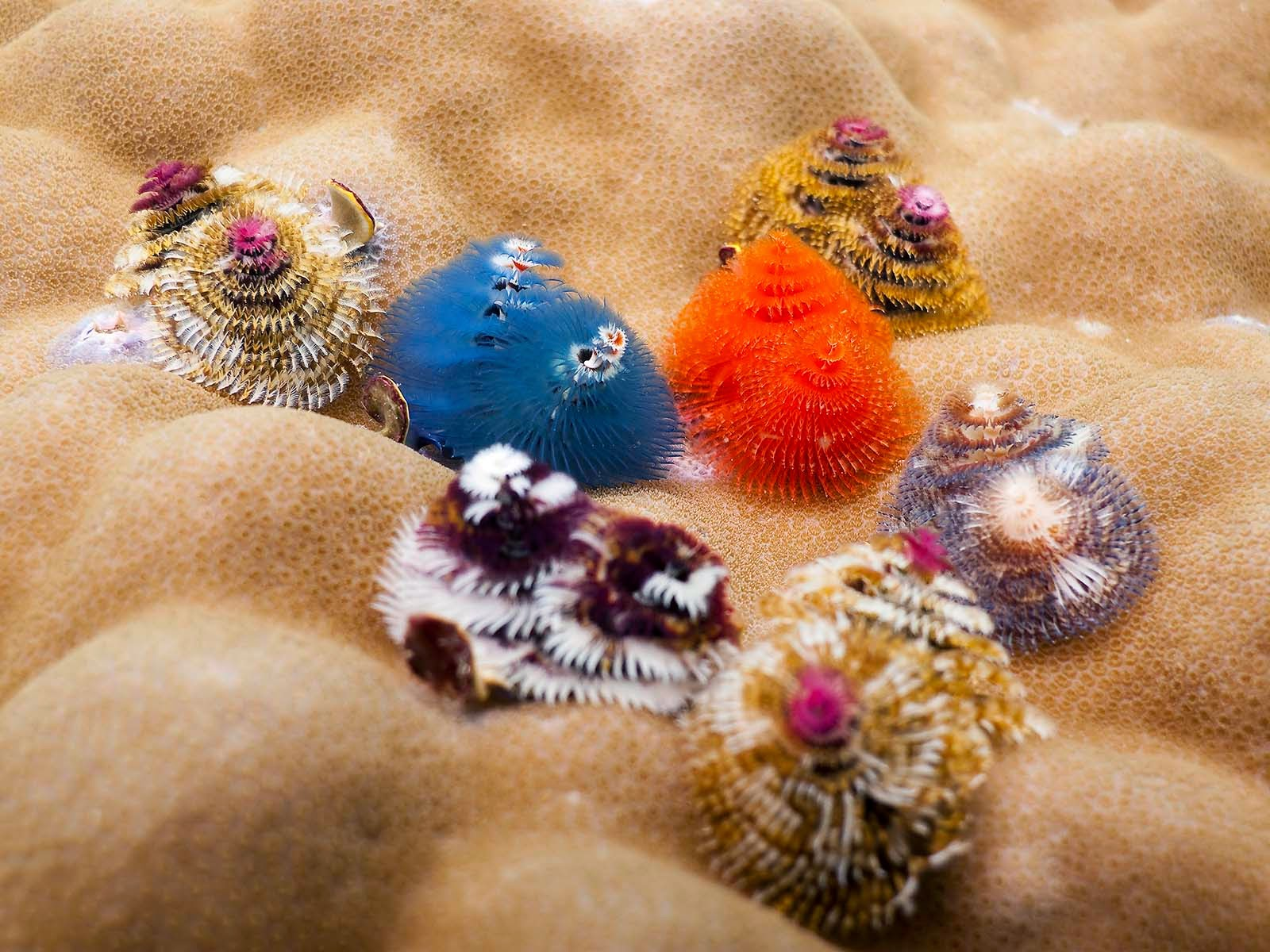 Hoolawhoop Christmas Tree Worms