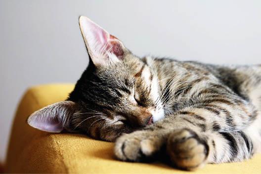 Co zrobić, gdy kot skaleczył się w łapę?