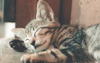 pantun selamat tidur buat pacar tersayang