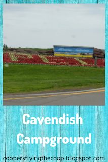 picture of PEI in flowers on the side of the road; text under reads Cavendish Campground