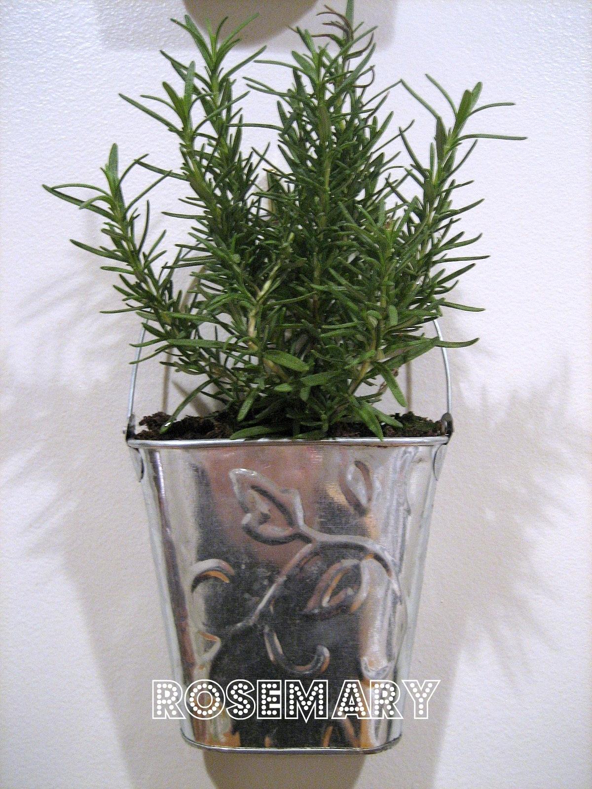 Kitchen Garden Herbs Guest Project Make A Kitchen Garden Wall