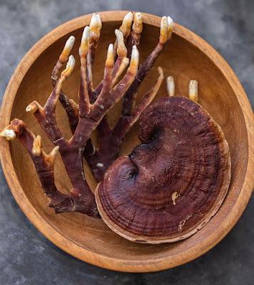 Lingzhi mushroom farming training