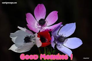 good morning nature