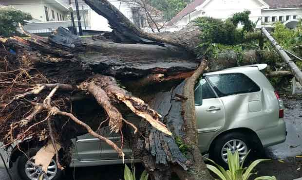 pohon tumbang di kota malang timpa mobil kijang innova