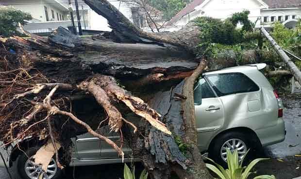 Hujan Deras Disertai Angin Kencang , 22 Pohon Tumbang, 4 Orang Luka