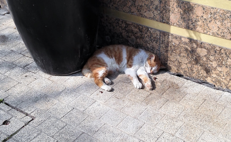 死んだようにお昼寝する野良猫(^-^)