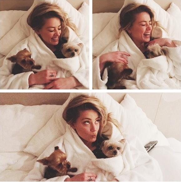 Amber heard Oscars 2017 in bed