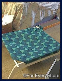 Figgy's hammock.