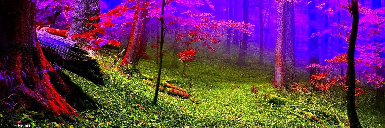 twitter background nature - photo #23