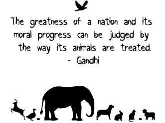 World Animal Day Wishes Sweet Images