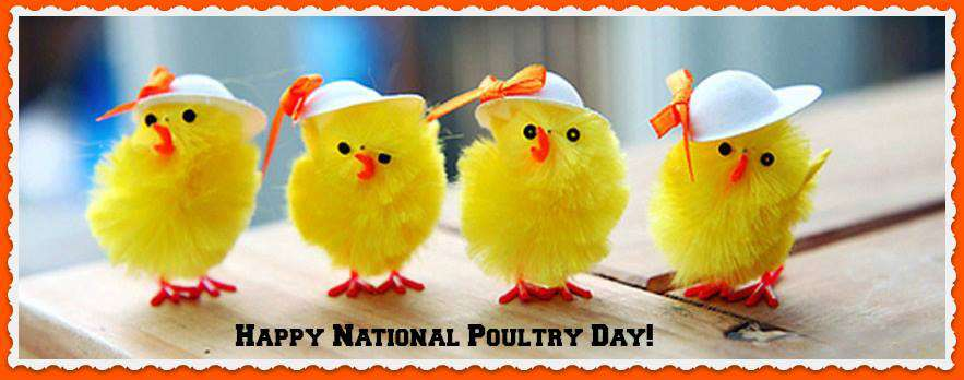 National Poultry Day Wishes Photos