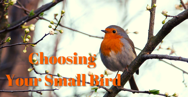 how to choose small bird