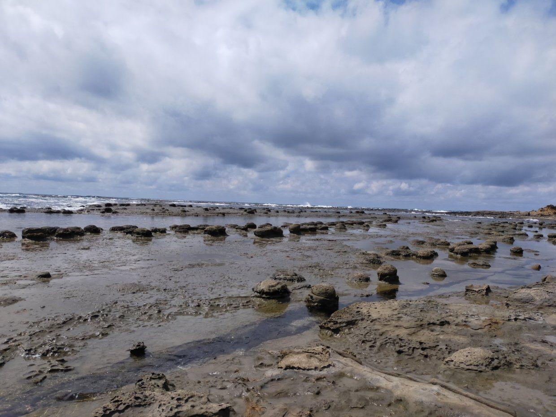 「ノジュール」とよばれる、貝殻に含まれる炭酸カルシウムなどがコンクリート状に固まった岩。
