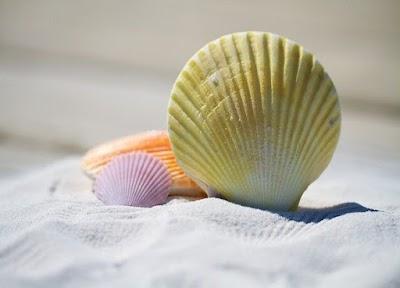 Como pintar conchas marinas para hacer manualidades
