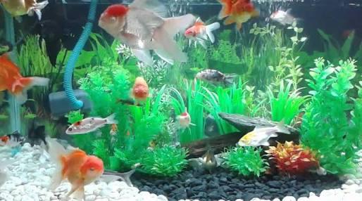 Hani Aquarium Toko Ikan Hias Dan Perlengkapan Akuarium Di Bintara Bekasi
