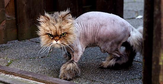 O mistério dos gatos sequestrados que voltam pra casa com pelos raspados - Capa