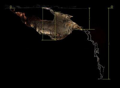 Mappa Grotta Gigante (sezione)