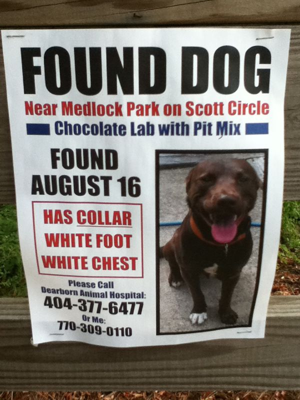 Found Poster Template. Lost Poster Template Missing Lost Dog