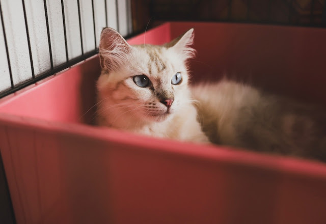 Cara Mengatasi Kucing Agar Mau Makan
