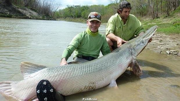 7 Daftar Ikan Terbesar Di Dunia Yuk Di Simak Sejujurnya Com