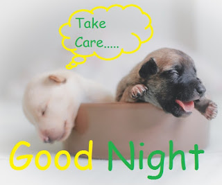 good night cute puppy images