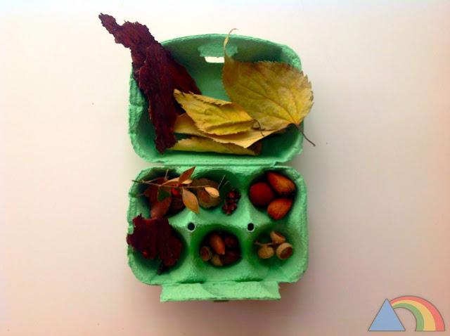 Huevera de cartón con diferentes materiales naturales clasificados: almendras, hojas, capuchones de bellota, corteza...