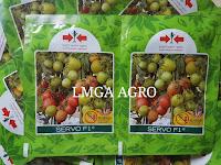 manfaat tomat, menanam tomat, jual benih, lmga agro