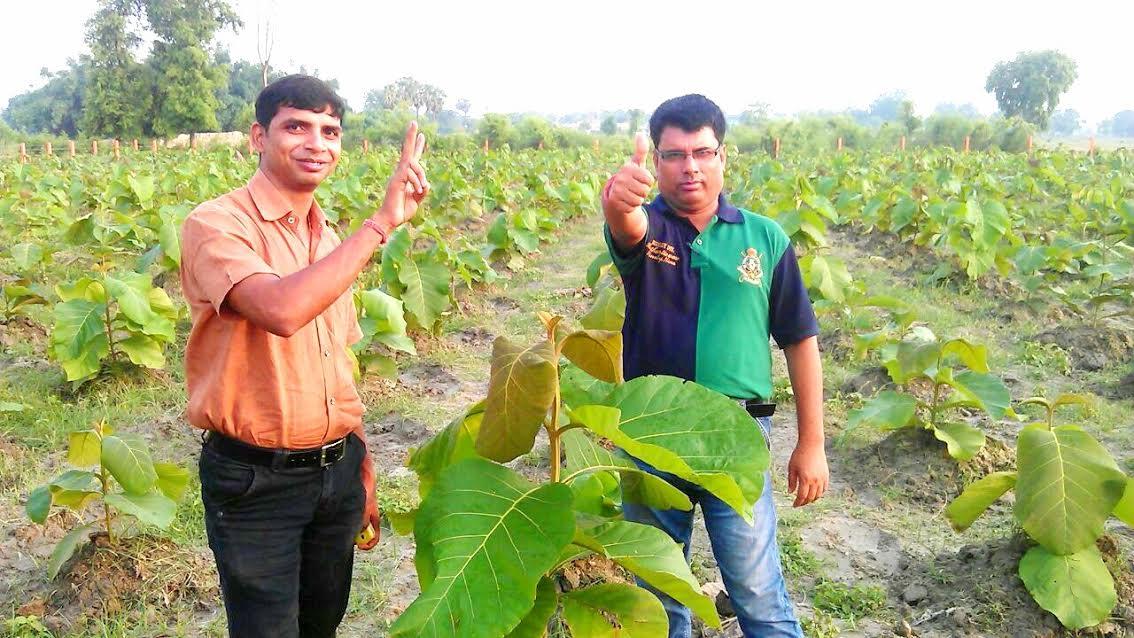 Teak Wood Plantation In Uttarakhand