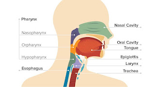 throat cancer definition