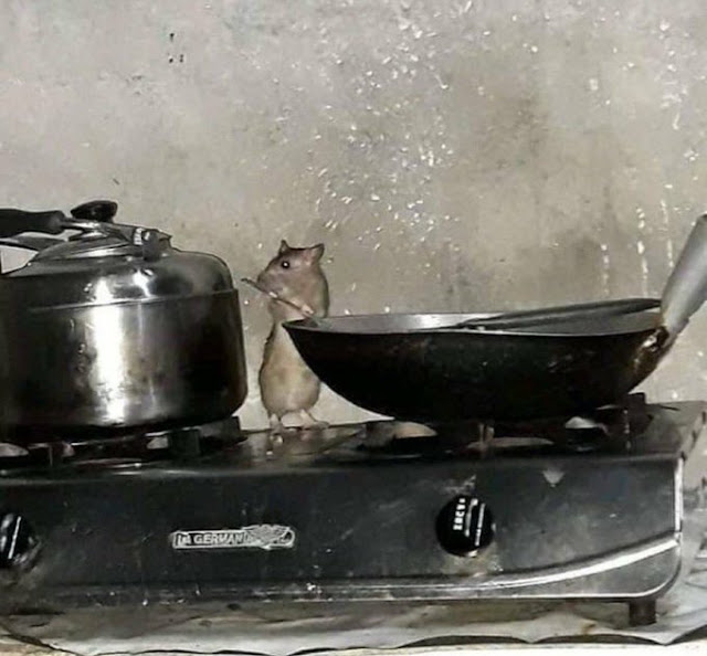 Man cries out Twitter after seeing a Rat in his Kitchen Cooking itself (Pictures)