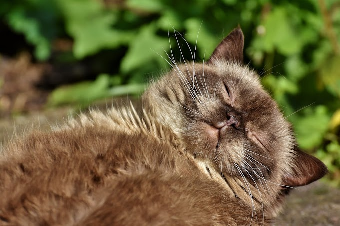 S'occuper des poils de chat