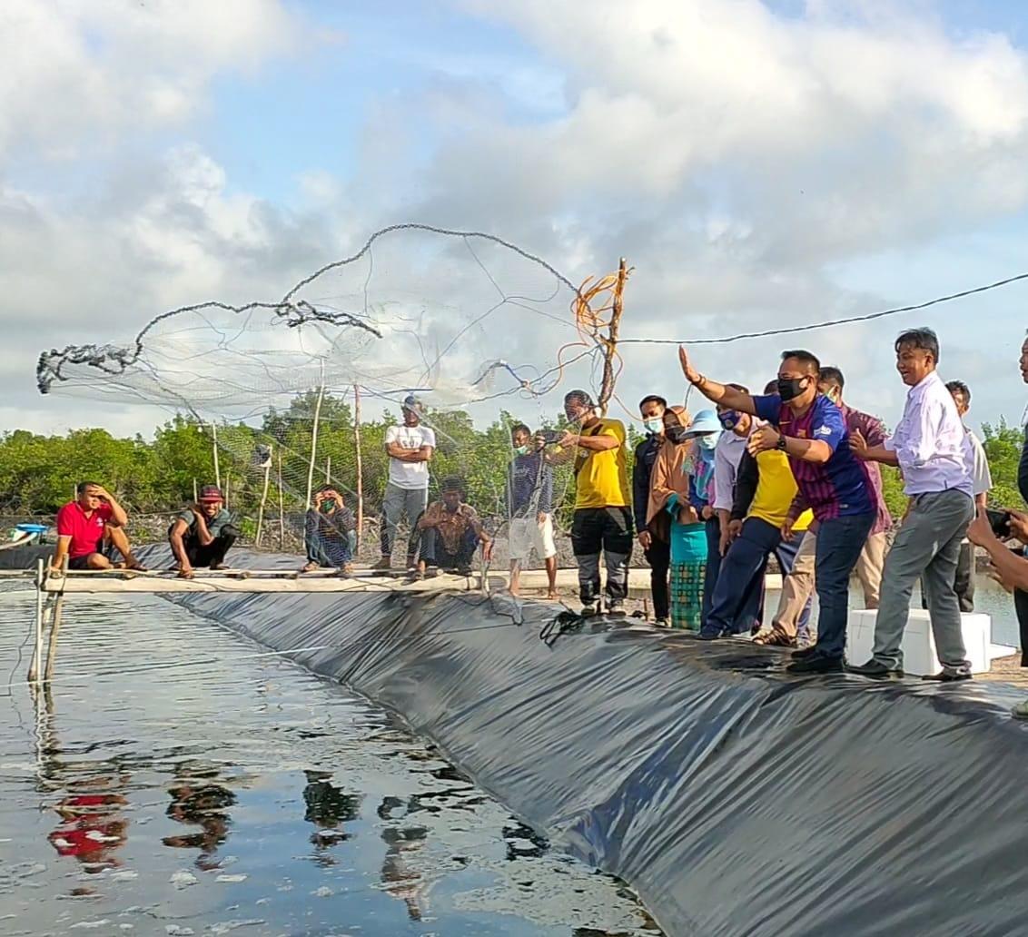 Turun Memanen Udang, Plt Bupati Lingga Minta Para Kelompok Pembudidaya Dapat Kembangkan Usahanya