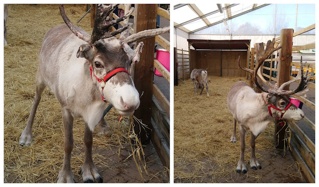 Garson's reindeer