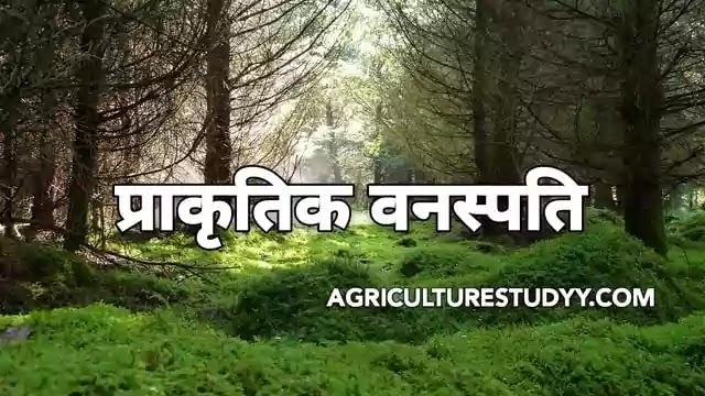 प्राकृतिक वनस्पति ( Natural vegetation in hindi )