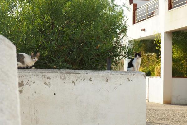 port cats