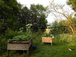 Hochbeete Veganer Garten