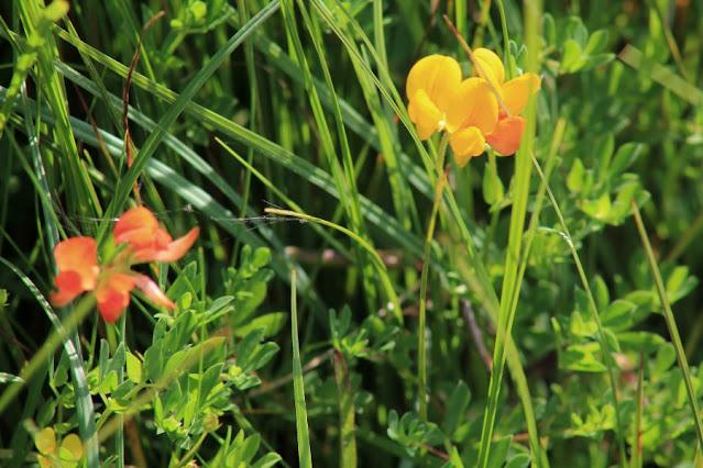 Wildflower Ballycroy National Park