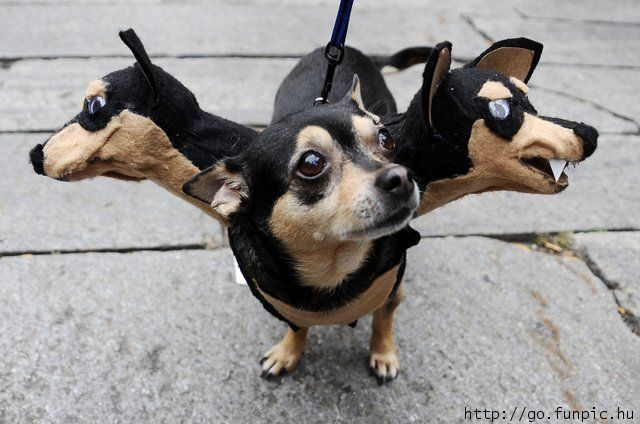 Funny Pet Costumes | Amazing Creatures