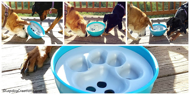 dogs playing with food bowl