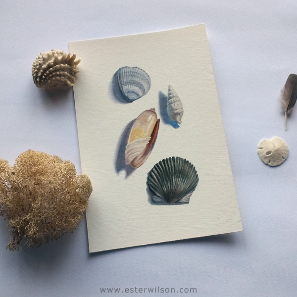 "Shells 4""x6"" oil painting"