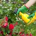 Inseticidas Naturais: dicas ecológicas para combater pragas em sua horta