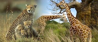 भावशून्य रहने से नहीं होगा वन्यप्राणियों का संरक्षण