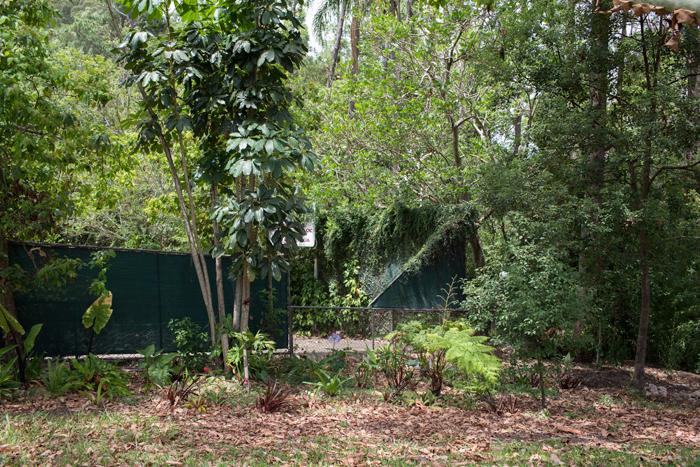 jungle yard