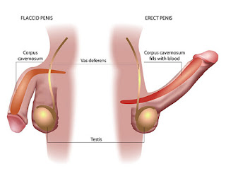 Erectile dysfunction (ED) is a complex condition involving psychosocial and biological factor